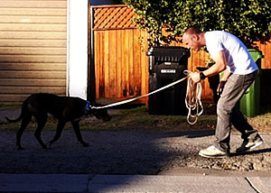 Dog Training Los Angeles